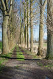 Trackway between tall bare trees