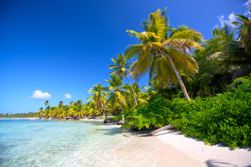 Caribbean sand beach with palm trees in Dominican Republic