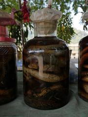 Death reptils liquor, Luang Prabang, Lao