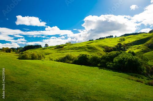 Hills of New Zealand - 62259566