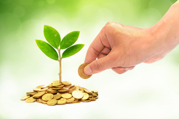 hand giving a coin to a tree growing from pile of coins / csr