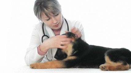 veterinarian examines puppy ears