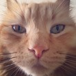 leon face