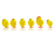 Easter chicks in a line
