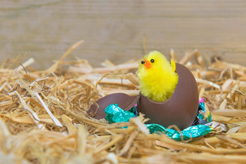 Easter chick hatching