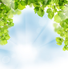 Summer leaves on floral greenery background