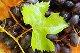 Sunny grapevine, grape and leaf