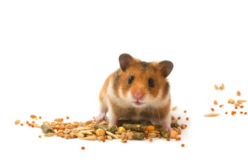 Hamster feed the hamster