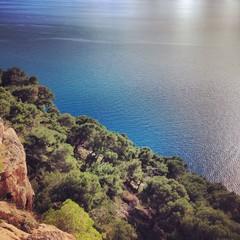 Pine trees above sea
