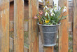 Spring Decorations on a Picket Fence