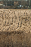 Field crops not sown in late autumn