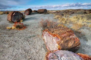 Petrified wood of triassic period in Petrified Forest