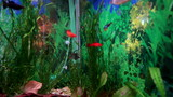 Beautiful aquarium with fish and algae