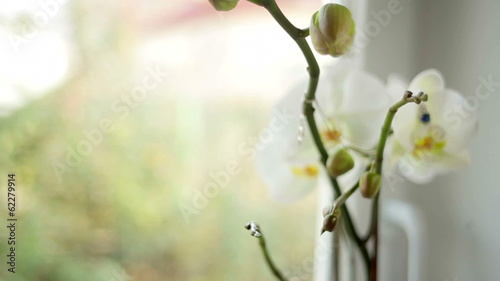 Beautiful white flower and chain on a blurred background