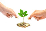 hands giving a coin to a tree growing from pile of coins / csr