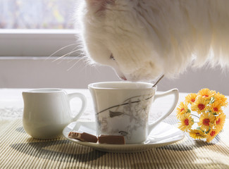 cup of coffee, milk and cat, yellow flowers on a table