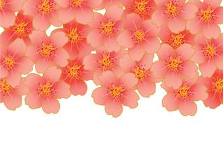 桜_フレーム_曲線_白