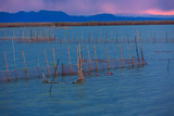Albufera sunset lake park in Valencia el saler Spain