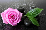 Spa stones with drops, pink rose and green leaves