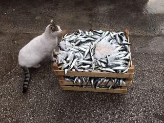 Kedi ve Balıklar