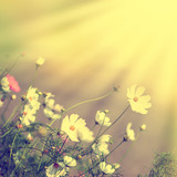 Defocus blur beautiful floral background