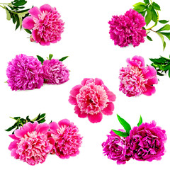 Peonies bright pink set