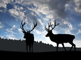 Deers silhouettes in the sunset - 62294138