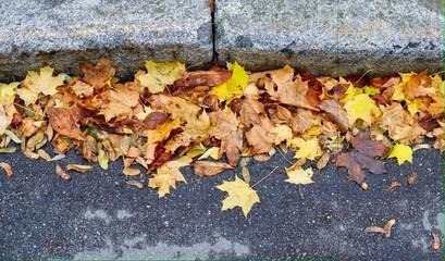 опавшие листья на асфальте у обочины