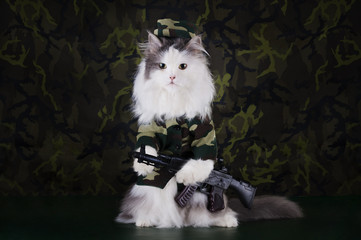 cat clothes soldiers