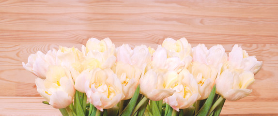 Yellow tulips background.