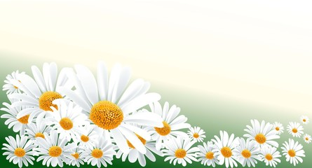 daisy backround