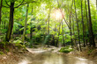 Leinwanddruck Bild - Waldlichtung