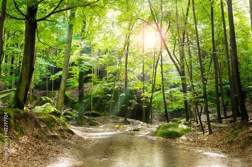 Fotobehang Bossen Waldlichtung