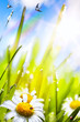 canvas print picture - abstract sunny beautiful Spring  background