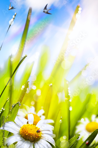 canvas print picture abstract sunny beautiful Spring  background