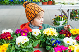 Cute toddler boy choosing flowers in a flower shop