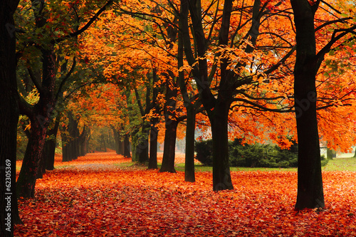 Foto Spatwand Bomen red autumn in the park