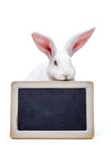 Rabbit over the blank blackboard