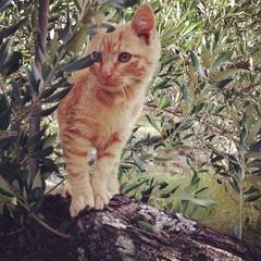 Baby cat on tree