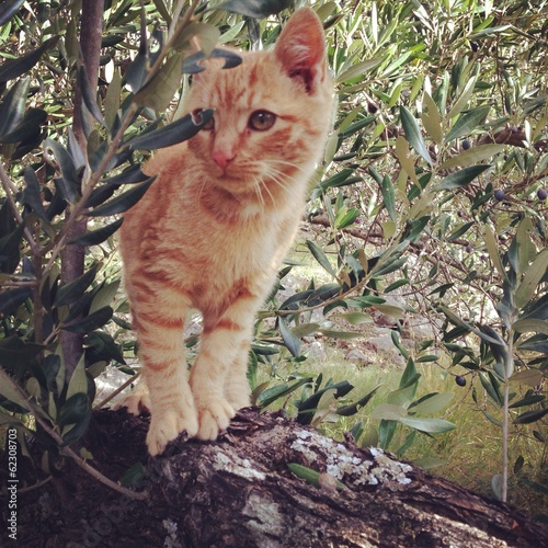 Baby cat on tree