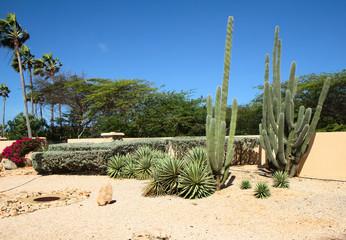 The Caribs. The Island Of Aruba.