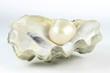 Leinwandbild Motiv Auster mit Perle