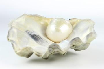 Perle02