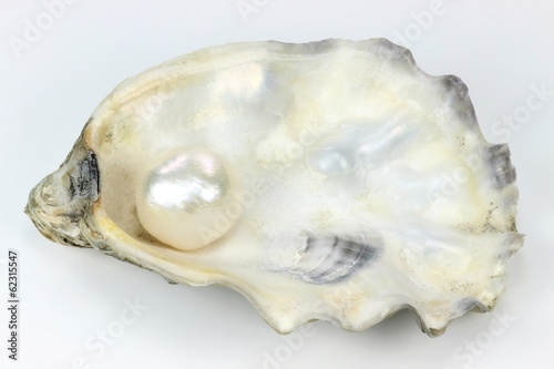 Auster mit Perle - 62315547