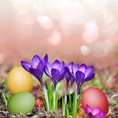 Krokusse und bunte Eier