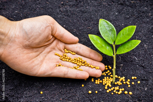 hand giving fertilizer to a young plant / planting tree