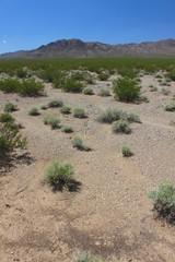 Mojave Desert Southern California
