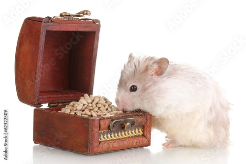 Cute hamster and chest with seeds isolated white