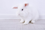White cute rabbit, close up
