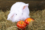 White cute rabbit with apples on hay